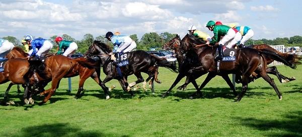 Royal Ascot Horse